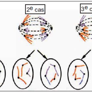 capture-serie-gene