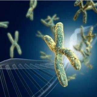 capture-gene111