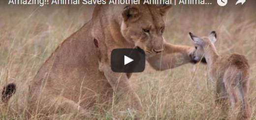 Animal Saves Another Animal Amazing