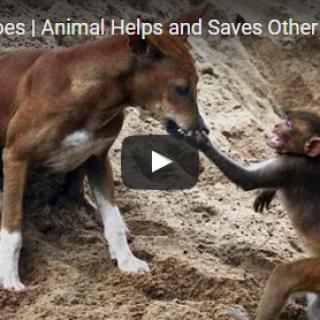 Animal Heroes Animal Helps and Saves Other Animal
