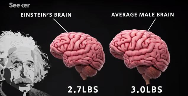 stile popolare bambino alta qualità Einstein's Brain Was Stolen and Chopped Up Into Tiny Pieces ...