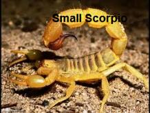 Capture scorpio