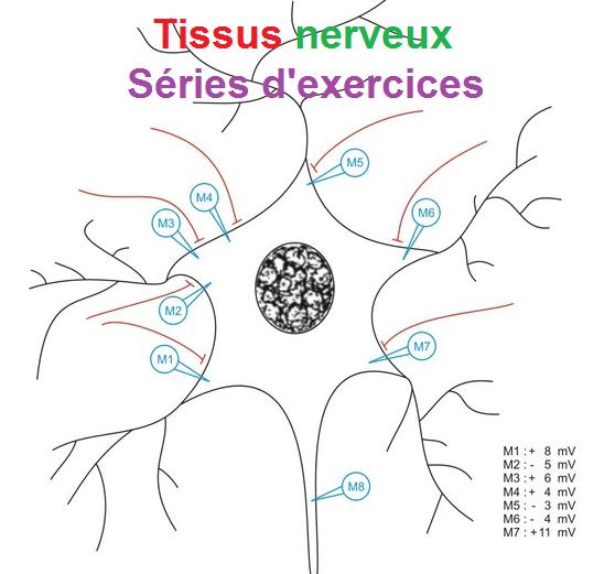 Série d'exercices corrigés TISSUS NERVEUX